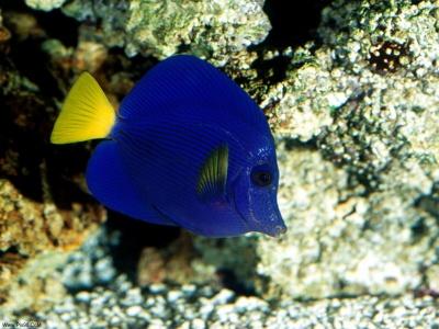 عکس های بسیار زیبا از ماهی هاWww.Pix98.CoM